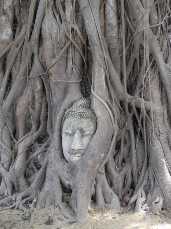 Buddha head in banyan tree, Ayutthaya