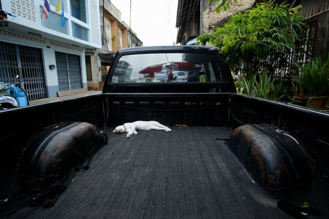 Lazy cat on a truck in Chanthaboon Community*