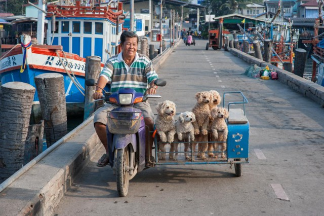 Amusing way of Thai transportation (photo credit: wilkipedia.com)