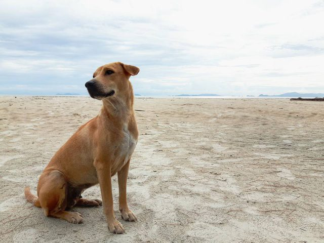 A dog on the island*
