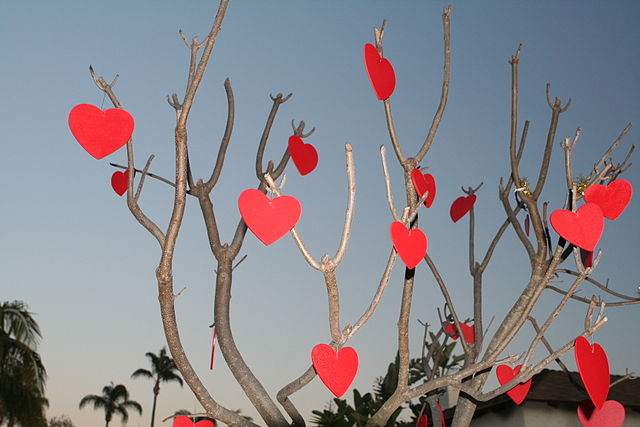 Valentine's Day Tree (photo: Johntex, wikimedia.org)
