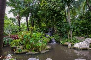 The tropical garden at the museum*