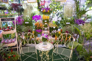 Everything for the garden lovers