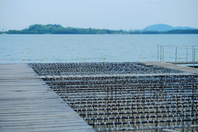 Amazing sea scape & oyster farm*